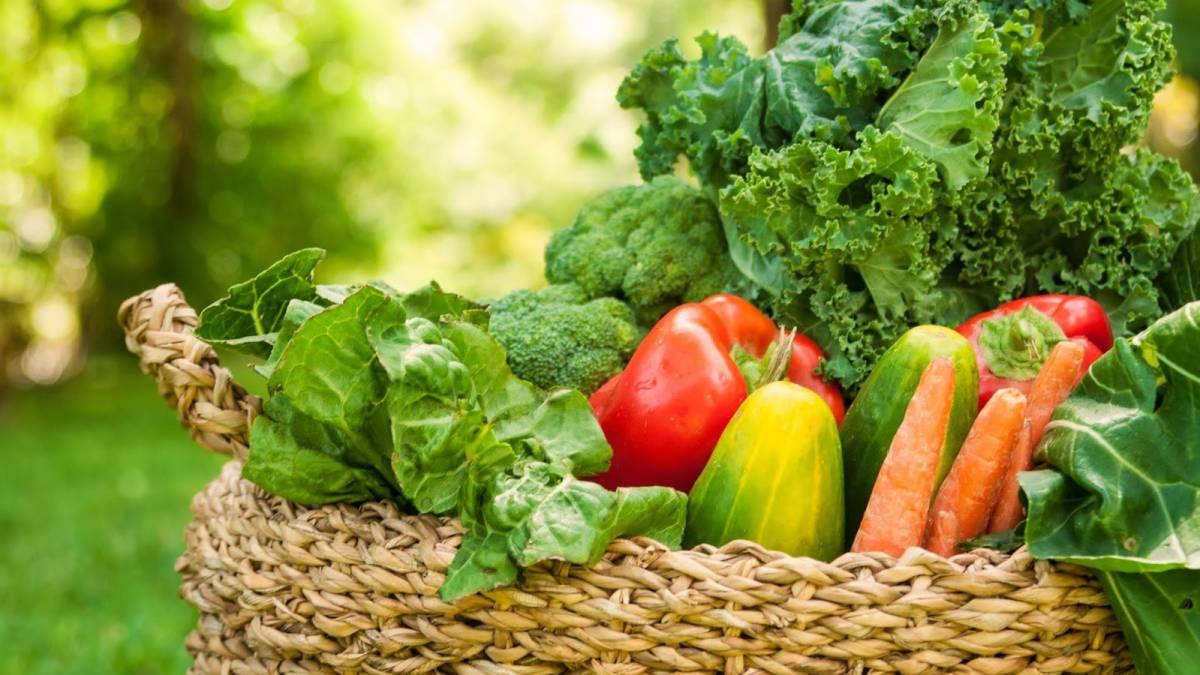 dieta alcalina cancer scielola