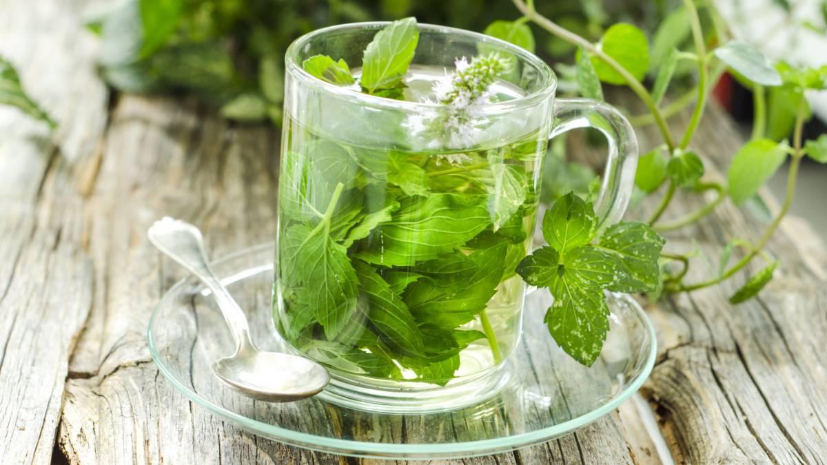 medicina natural ajenjo