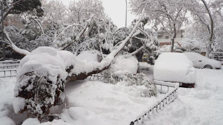 Temporal de nieve Filomena, en directo hoy: estado de las carreteras,  Barajas y transporte público | Alerta roja en Madrid - AS.com