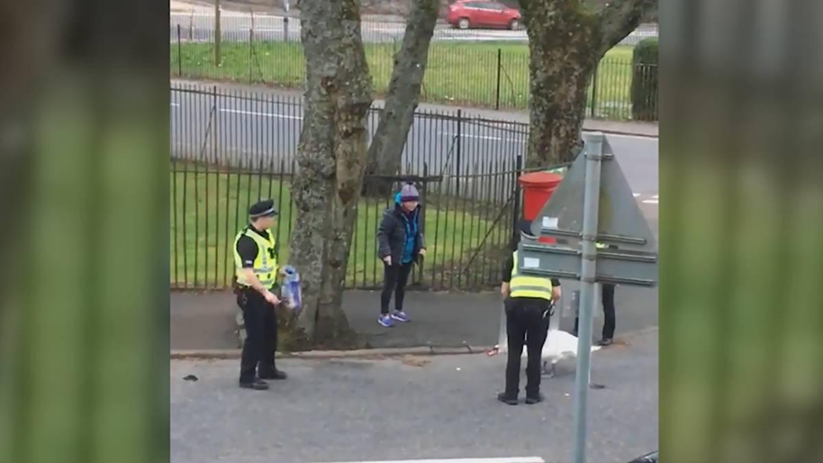 Resultado de imagen para Policías devuelven a un cisne a su hogar armados con escudos antidisturbios y pan